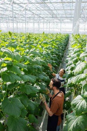 vue en grand angle des agriculteurs multiethniques travaillant près des plantes en serre