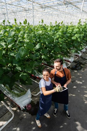 high angle view of interracial colleagues with digital tablet in greenhouse