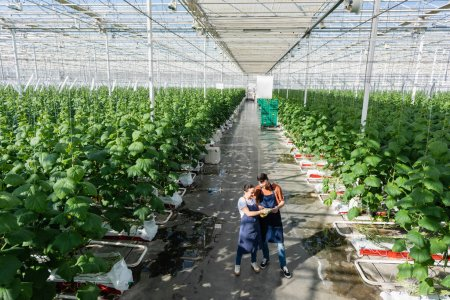 high angle view of interracial farmers looking at digital tablet in glasshouse