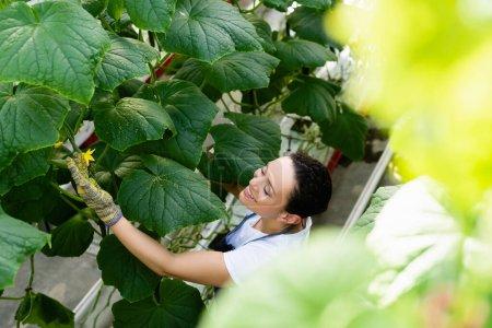 vue grand angle d'une femme afro-américaine joyeuse près d'une plante de concombre en fleurs, au premier plan flou