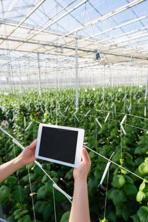 vue recadrée d'un agriculteur tenant une tablette numérique avec écran blanc en serre