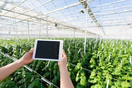 partial view of woman holding digital tablet with blank screen in greenhouse