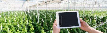 vue partielle de l'agriculteur tenant tablette numérique avec écran blanc dans la serre, bannière