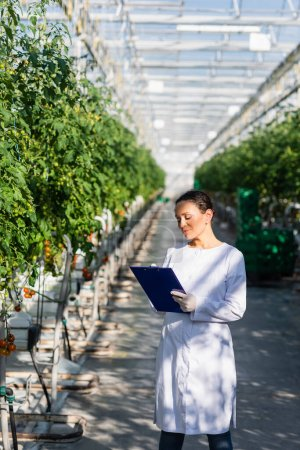 african american quality inspector writing on clipboard near tomato plants in greenhouse