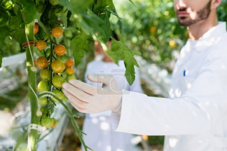 cropped view of quality inspector examining cherry tomatoes, blurred background