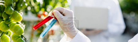 partial view of biologist holding test tubes near cherry tomatoes, banner