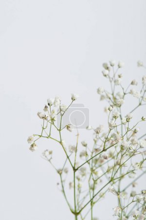 branches with tiny blooming flowers isolated on white