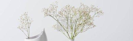 Photo pour Branches avec des fleurs en fleurs dans un vase isolé sur blanc, bannière - image libre de droit