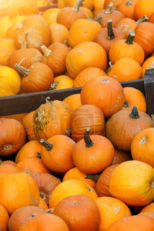 Pumpkin's harvest on market