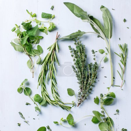 Photo for Assortment of fresh herbs thyme, rosemary, sage and oregano over light blue wooden background. Top view. Square image - Royalty Free Image