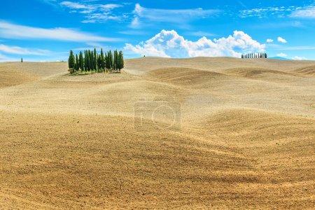 Beautiful Tuscany landscape with cypress trees near Siena,Italy,Europe