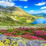 Glacier lake,high mountains and stunning pink rhod...