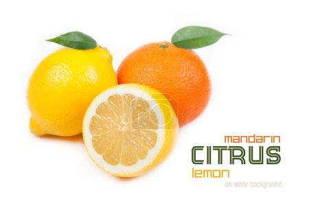 Photo pour Agrumes : mandarine, citron sur fond blanc - image libre de droit