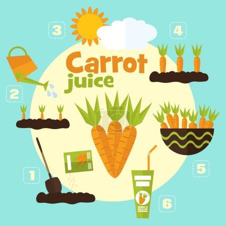Illustration pour Illustration vectorielle de jardin en style plat. Plantation de carottes, récolte, transformation de carottes en jus . - image libre de droit