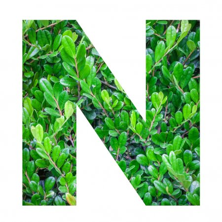 English alphabet letter with green leaves