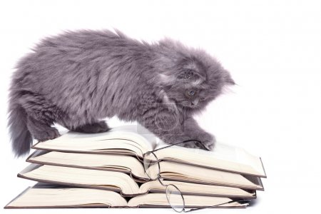 Cute little kitten and books