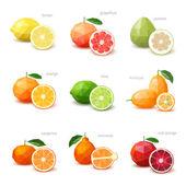 Set of polygonal citrus fruit - lemon grapefruit pomelo orang