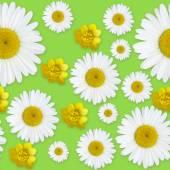 Vzor květy sedmikráska