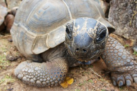 Turtle looking funny at the camera