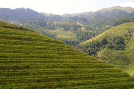 Rice terraced in Northern Vietnam