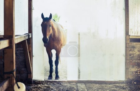 Old horse at the stables