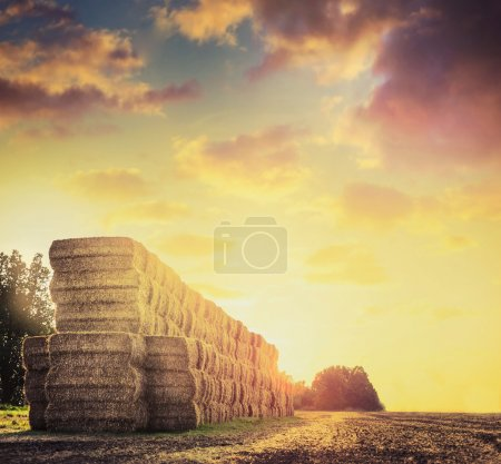 Field with hay or straw bales on background of bea...