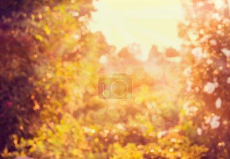 Foto de Borrosa de otoño fondo de naturaleza con la luz del sol y bokeh - Imagen libre de derechos