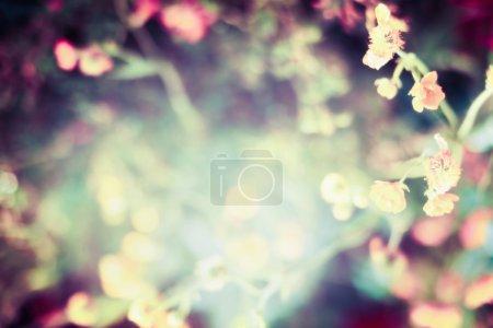 Foto de Fondo de naturaleza borrosa con flores, hojas, sol y bokeh - Imagen libre de derechos