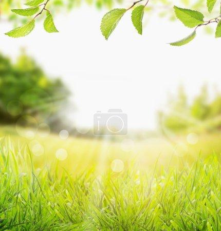 Foto de Primavera verano naturaleza fondo con césped, rama de árboles con hojas verdes y rayos de sol con bokeh - Imagen libre de derechos