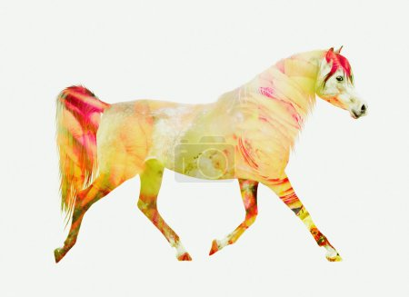 Horse running trot