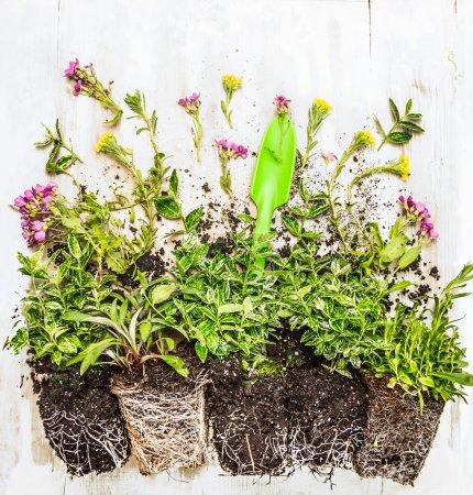 plants and green garden scoop