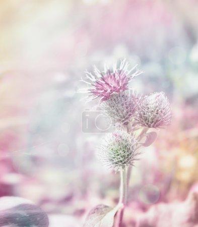Fresh garden flowers