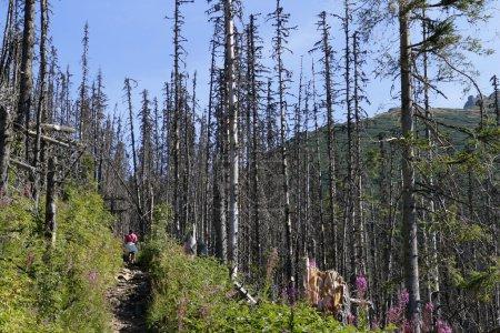 Walking through dried woods