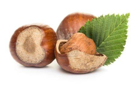 Hazelnuts with green leaf