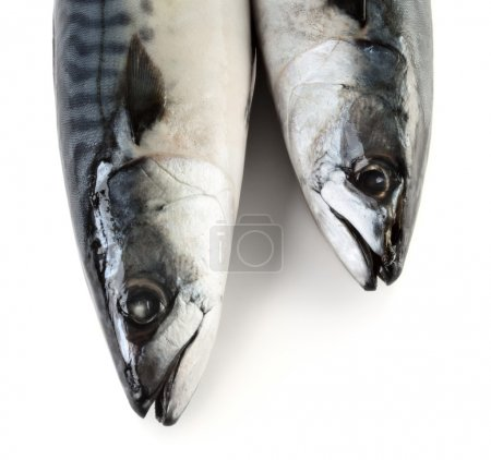 Two mackerel fishes