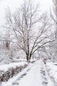 Sněhem pokrytá dubu v destinaci winter park