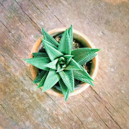 Photo for Decorative aloe plant in clay pot, on old wooden surface. - Royalty Free Image