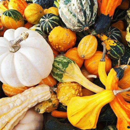 Foto de Calabazas coloridas y calabazas en el mercado de otoño. - Imagen libre de derechos