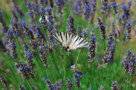 Cutlery butterflies on lavender flowers