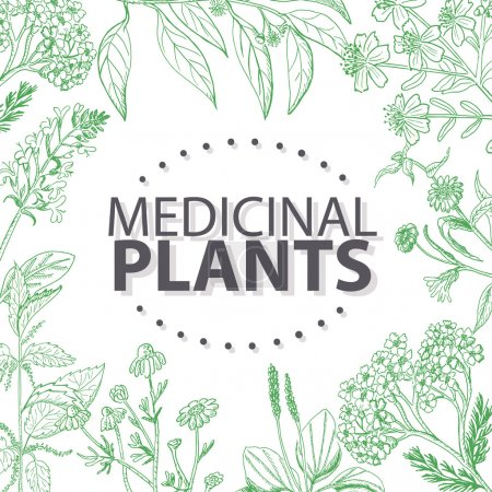 Vector background with medical herbs