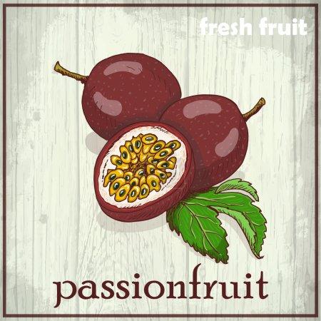 Hand drawing illustration of passionfruit. Fresh fruit sketch background