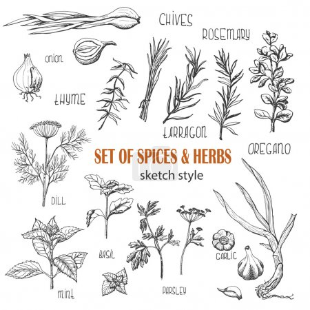 Set of Herbs and spices in sketch style