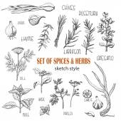 Set of Herbs and spices in sketch style Vector illustration for your design