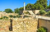 The Tunisian antiquities