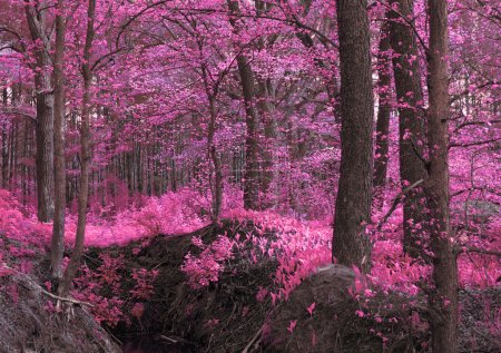 Magic wood pink-purple
