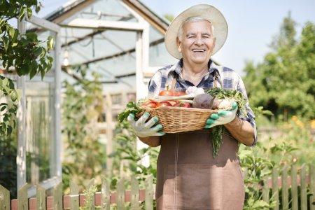 elderly man with  organic vegetables