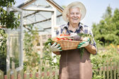 elderly man with  organic vegetables