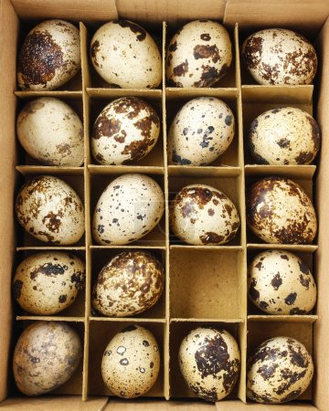Box of quail eggs