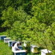 Постер, плакат: Experienced senior apiarist making inspection in apiary in the springtime