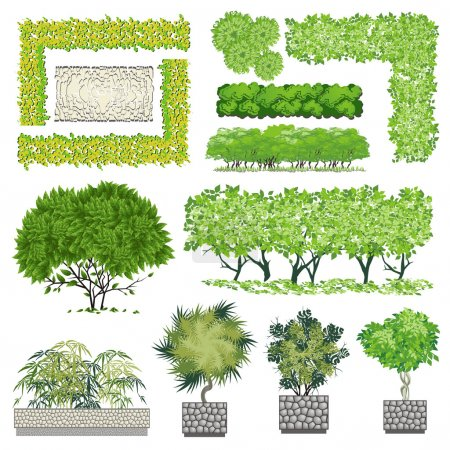 Trees and bush item for landscape design, vector icon.